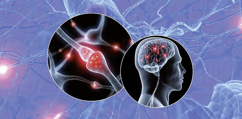 Utveckla din hjärna med att träna Life Kinetik