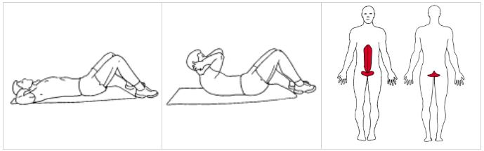 Magträning ©ExorLive.com, IPTA utbildning inom träning