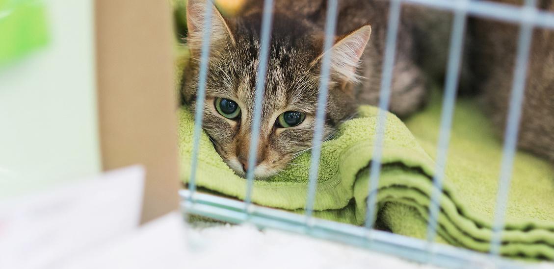 Köp ett hjälpmedel mot musarm och vi skänker pengar till ett katthem som du väljer.