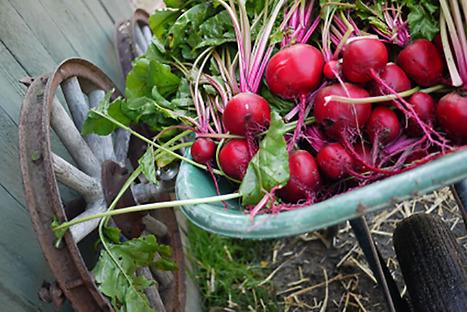 Mat som medicin – kost & näring. Behöver du gå ned i vikt får du hjälp av Berit.