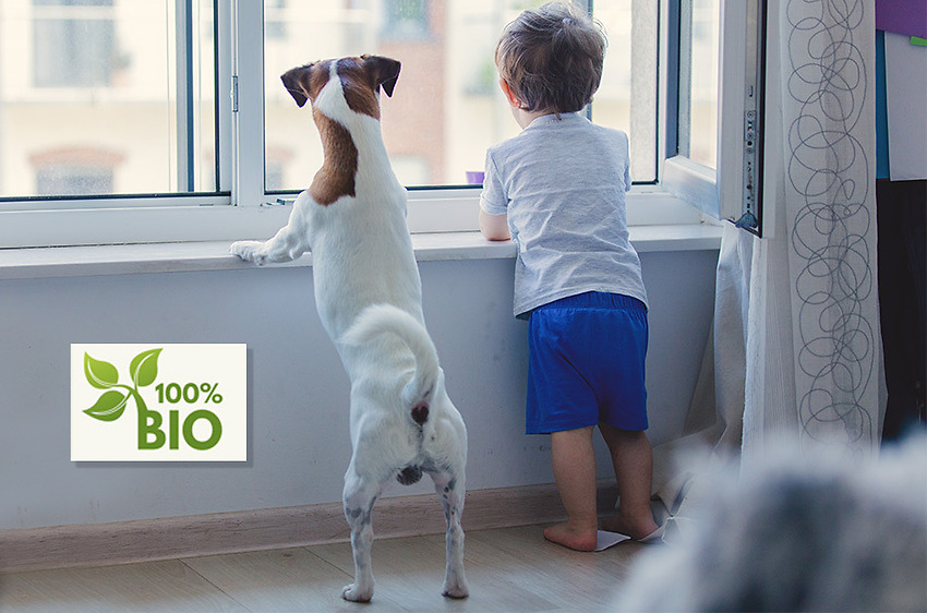 Miljövänlig fönsterputs med Städsällskapet