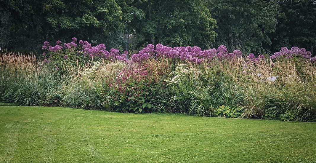 Trädgårdsdesign - Perennparken i Skärholmen