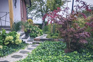 Trädgårdsdesign - murgröna