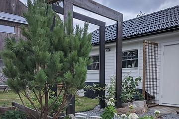 Trädgårdsarkitektur - Pinus