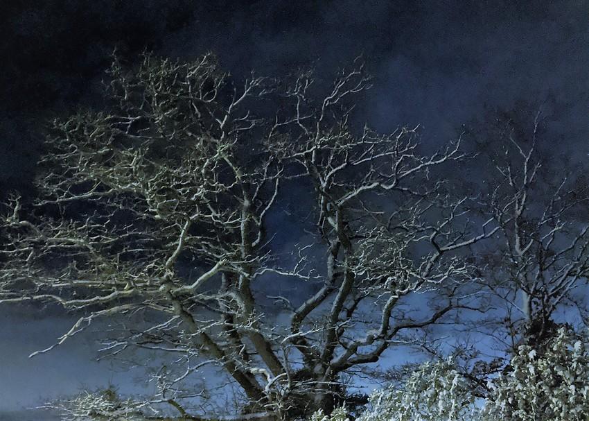 Vintersiluett ek
